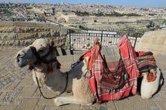 O Monte das Oliveiras, Jerusalém Imagem de Stock