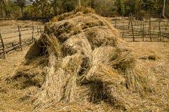 O monte de feno da palha no campo após a colheita Imagens de Stock Royalty Free