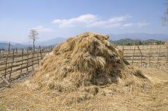 O monte de feno da palha no campo após a colheita Imagem de Stock