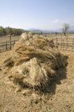 O monte de feno da palha no campo após a colheita Foto de Stock Royalty Free