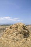 O monte de feno da palha no campo após a colheita Fotos de Stock