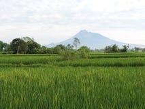 O Monte Merapi Indonésia 9 de março de 2016 Fotos de Stock