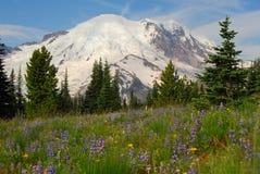 O Monte Rainier e prado Foto de Stock Royalty Free