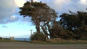 O monumento nacional de sequoia gigante em Califórnia, Estados Unidos vídeos de arquivo