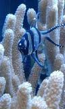 O morador do recife Imagem de Stock