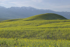 O Mountain View e a mola espetacular do ouro do deserto e a vária florescem ao sul da angra da fornalha no parque nacional de Val fotos de stock royalty free