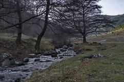 O movimento bonito borrou a paisagem do córrego da água no fim da floresta do inverno acima, montanha de Vitosha fotografia de stock royalty free