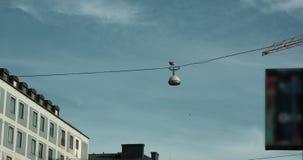 O movimento de Slowm disparou de uma gaivota em uma luz de rua, outras gaivotas que voam perto video estoque