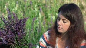 O movimento lento, close-up, mulher bonita recolhe o ramalhete das centáureas, sentando rasgos que o campo floresce na manhã no vídeos de arquivo