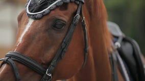 O movimento lento disparou de um close-up da cabeça de cavalo vídeos de arquivo