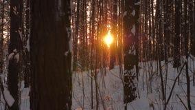 O movimento nas madeiras onde através das árvores brilha e vislumbra com o sol vídeos de arquivo