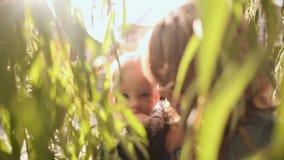 O Mum guarda nas mãos de um bebê pequeno ao lado dos arbustos, os toques da criança a folha, no verão na natureza video estoque