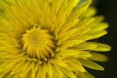 O mundo amarelo fotografia de stock royalty free
