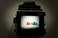 O mundo através de uma câmera velha do TLC Fotografia de Stock Royalty Free