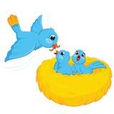 Ilustração do vetor dos bebês da alimentação do pássaro Imagens de Stock