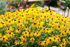 O mundo do festival dos países das fadas ajustou-se/flor do amarelo Imagem de Stock Royalty Free