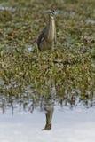 O mundo maravilhoso dos pássaros foto de stock