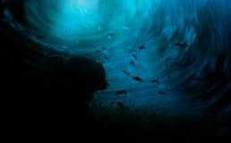 O mundo subaquático ilustração do vetor