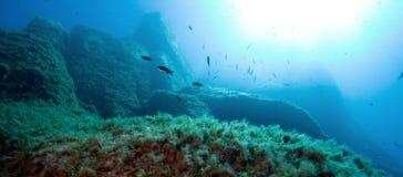 O mundo subaquático Fotografia de Stock