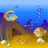 O mundo subaquático de peixes tropicais. Imagens de Stock