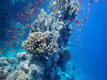 O mundo subaquático do mar imagem de stock