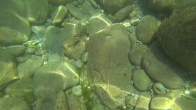 O mundo subaquático do Mar Negro com peixes filme