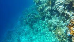 O mundo subaquático do Mar Vermelho vídeos de arquivo