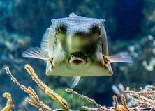 O mundo subaquático dos oceanos fotografia de stock