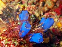 O mar esguincha Foto de Stock