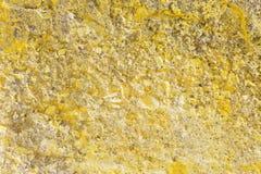 O muro de cimento velho Fotos de Stock