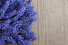 O muscari azul floresce em um fundo de madeira, com espaço da cópia Fotos de Stock Royalty Free