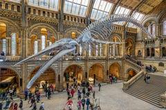 O museu da história natural em Londres fotos de stock