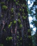 O musgo cobriu a árvore fotos de stock