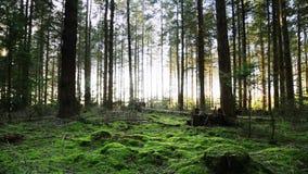 O musgo cobriu o assoalho da floresta vídeos de arquivo