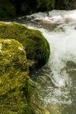 O musgo cobriu a rocha Fotos de Stock