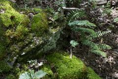 O musgo cobriu a rocha com as samambaias fotografia de stock royalty free
