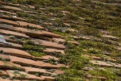 O musgo cobriu telhas de telhado. Fotografia de Stock