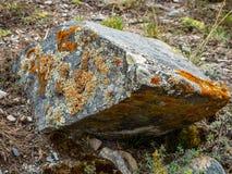 O musgo colorido cresce em rochas desencapadas nas montanhas de Altai, Rússia fotos de stock
