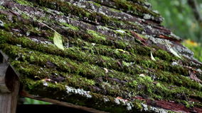 O musgo cresceu sobre o telhado de madeira filme