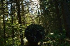 O musgo escurecido velho do início de uma sessão na floresta spruce à vista do sol de aumentação Imagens de Stock