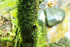 O musgo está na floresta abundante fotos de stock royalty free