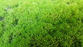 O musgo está na terra com umidade fotografia de stock royalty free