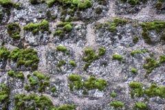 O musgo na parede Imagem de Stock