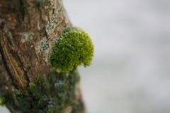 O musgo que cresce no tronco de uma árvore na floresta no inverno congelou cristais de gelo foto de stock