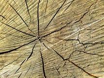 O núcleo de uma árvore do corte com quebras imagem de stock royalty free