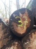 O número 37 pulverizou em um log foto de stock