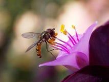 Oś na kwiacie Obraz Stock