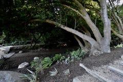 O nacional AJUDA ao bosque memorável San Francisco, 3 imagem de stock royalty free