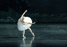 O nadada-bailado O Lago das Cisnes da cisne fotografia de stock royalty free