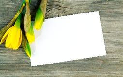 O narciso da mola floresce como uma beira e um Empty tag Imagens de Stock
